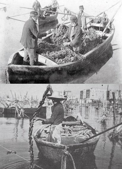 Taranto e le risorse del mare